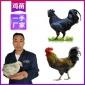 优质供应甘肃求购鸡苗价格-武威肉鸡价格